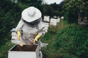 méhészek mindennapjai
