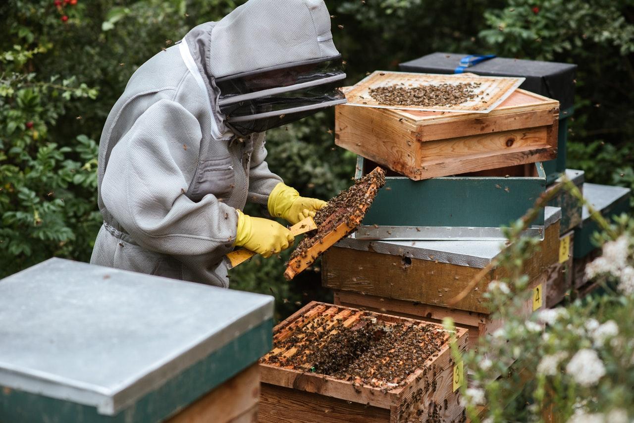 mire jó a méhpempő, vélemények, ár, ára - Bodó méhészet